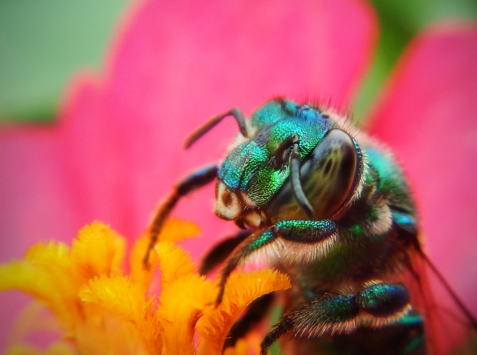 Bee, Macro, Pollen, Flower, Pollination, Plant, Insects