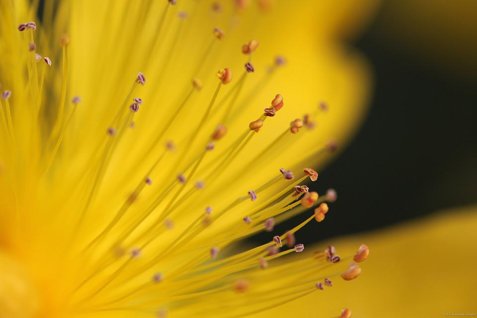 Yellow, Flower, Seeds Was, Nature, Plant, Seeds, Macro