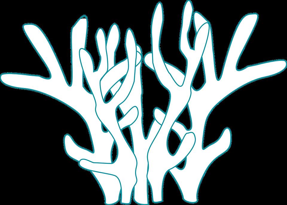 Coral, Underwater, Plant, Fauna, Marine