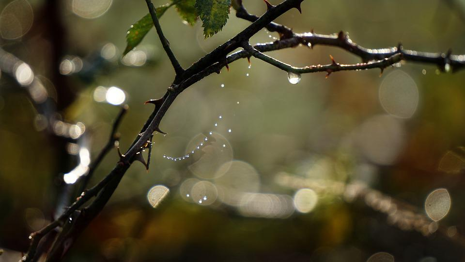 Nature, Autumn, Morgentau, Cobwebs, Plant, Flora, Water