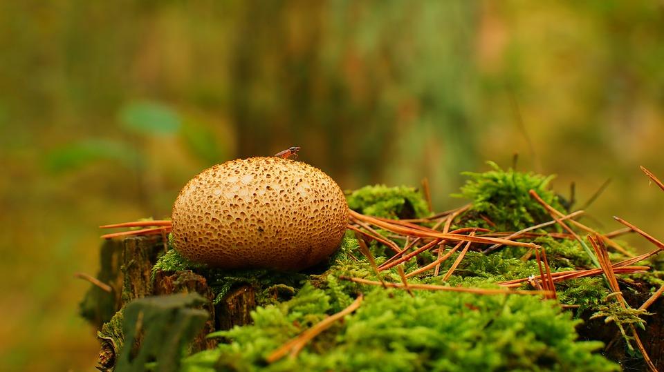 Mushroom, Plant, Toadstool, Mycology, Moss, Forest