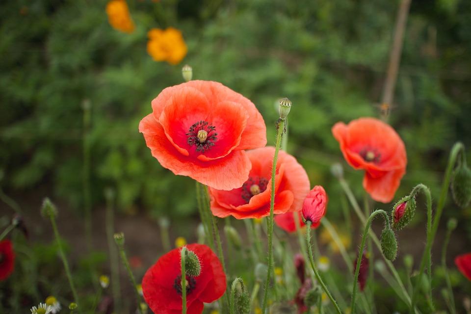 Flower, Natural, Plant, Summer