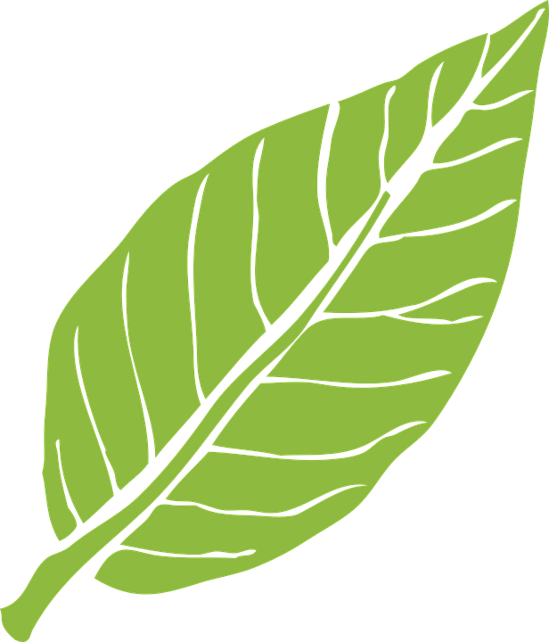 Leaf, Nature, Green, Plant, Natural, Tree, Pattern