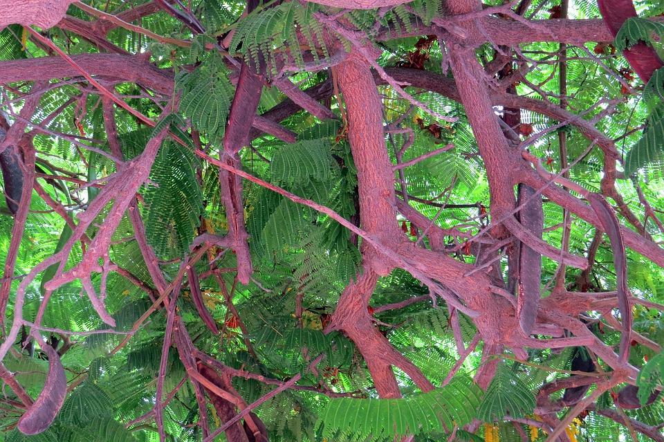 Plant, Nature, Background, Leaf