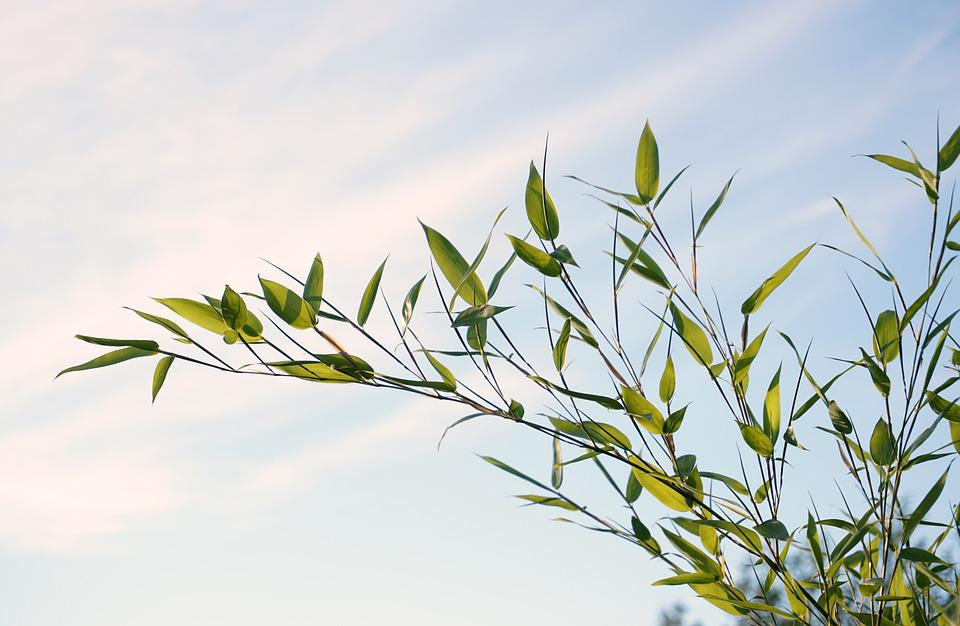 Reed, Plant, Grass, Nature, Green, Bamboo