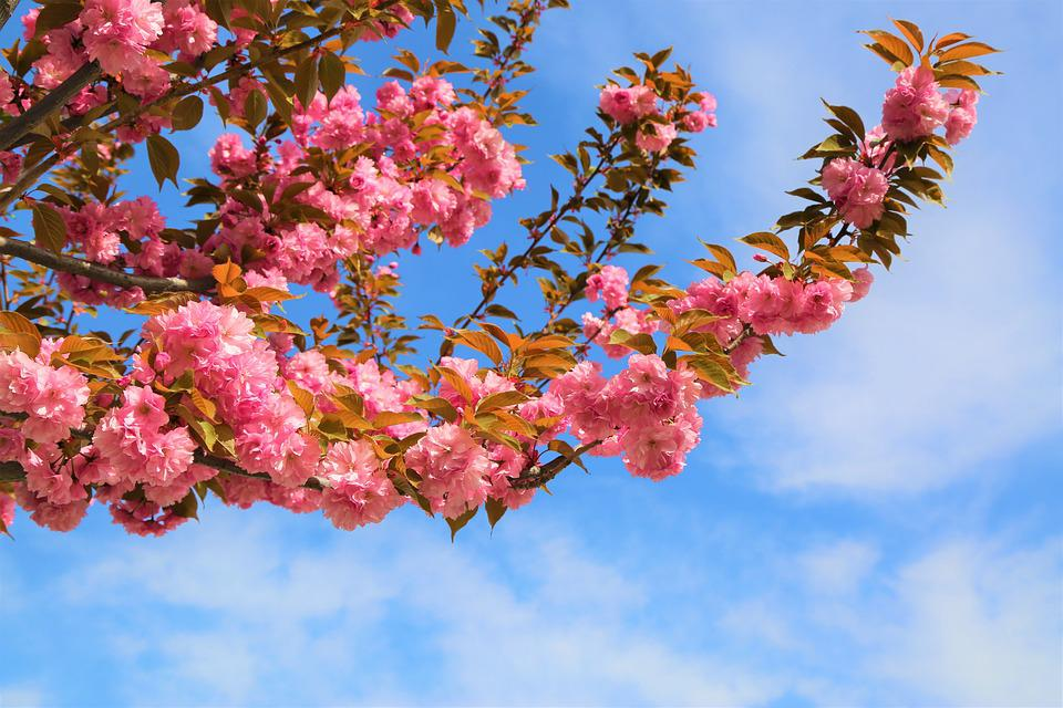 Flower, Tree, Current Season, Plant, Nature, Blooming
