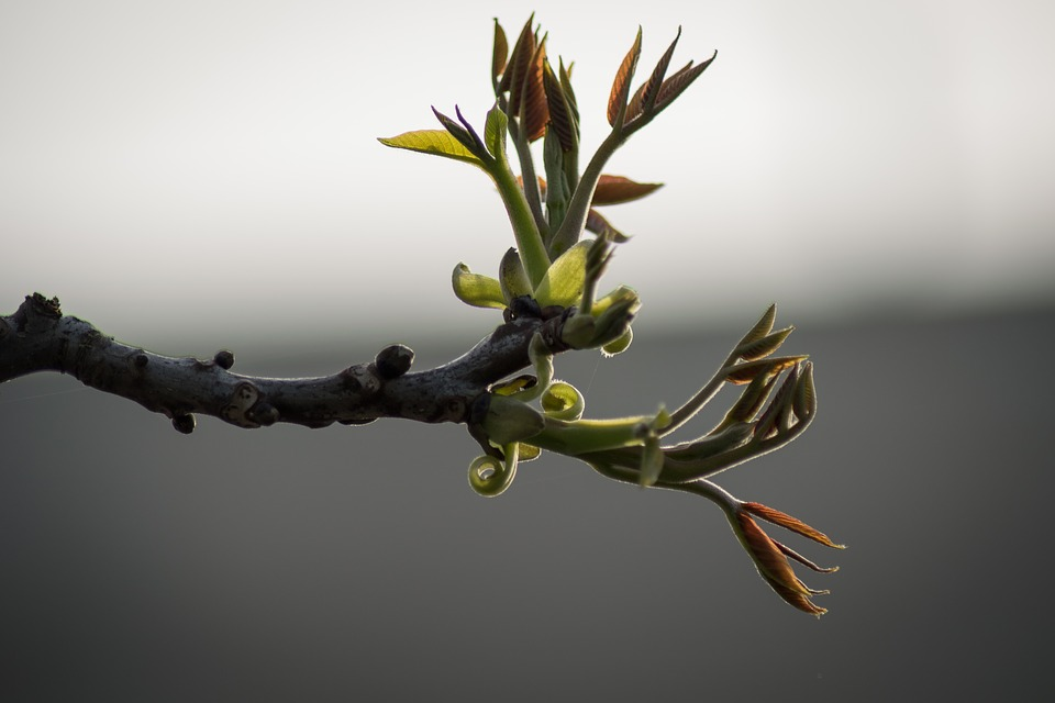Nature, Tree, Branch, Plant, Leaf, Green, Bud, Spring