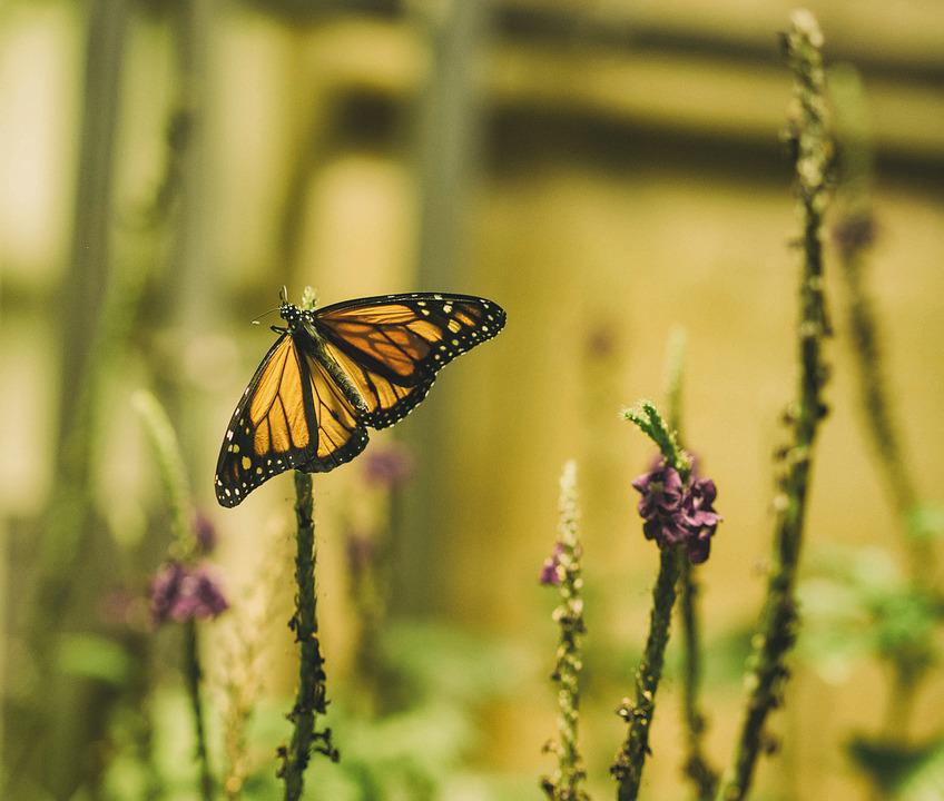 Butterfly, Flowers, Insect, Nature, Plant