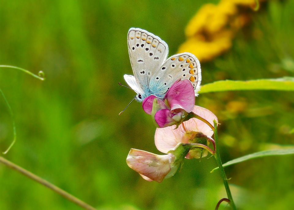 Butterfly, Plant, Green, Summer, Nature