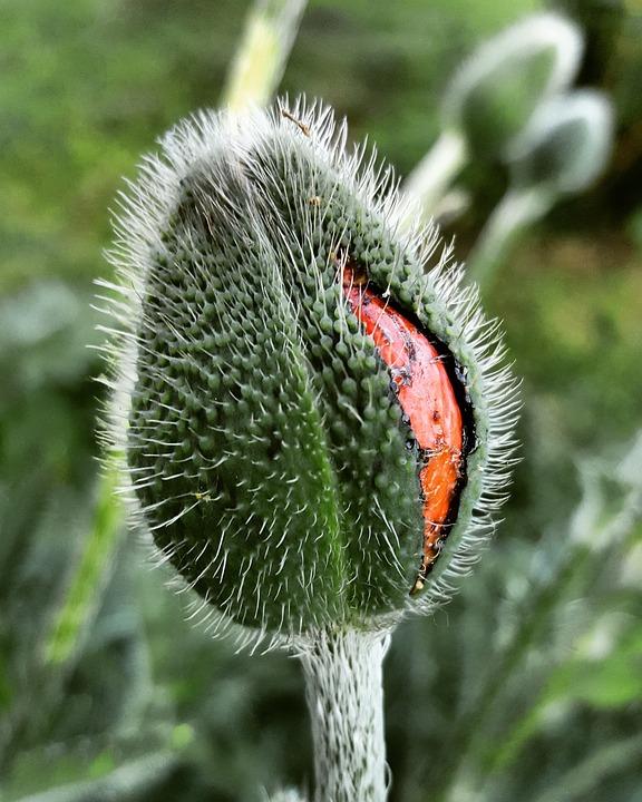 Nature, Plant, Close Up, Flower, Garden, Summer, Season