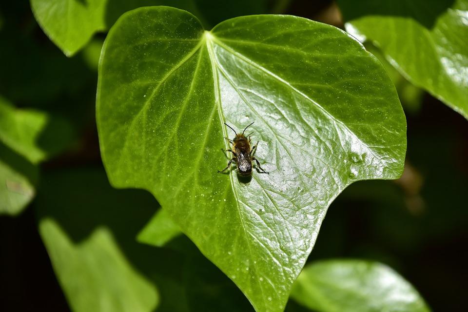 Leaf, Nature, Plant, Environment