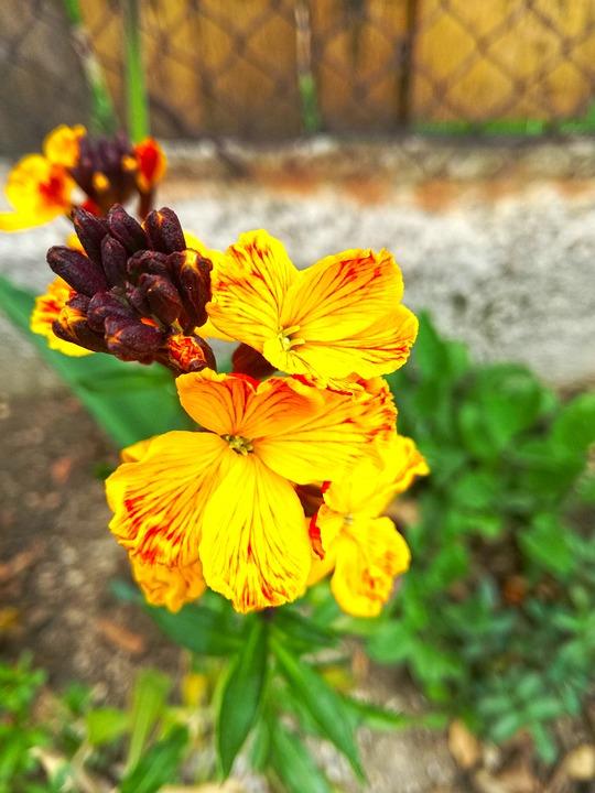 Flower, Spring, Orange, Nature, Plant, Flora