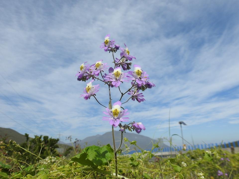 Plant, Flower, Nature