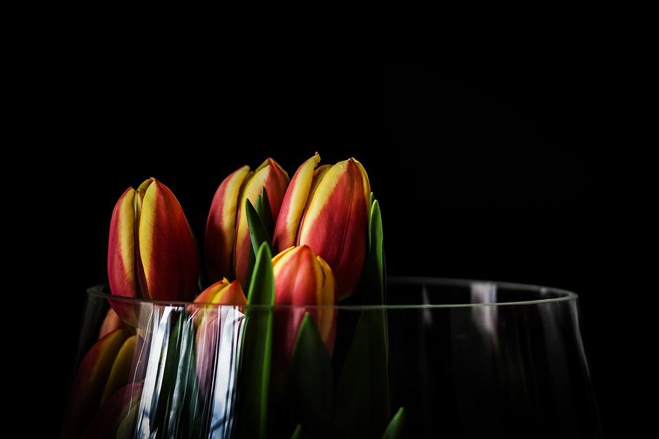 Tulip, Nature, Flower, Plant, Leaf, Background, Bright