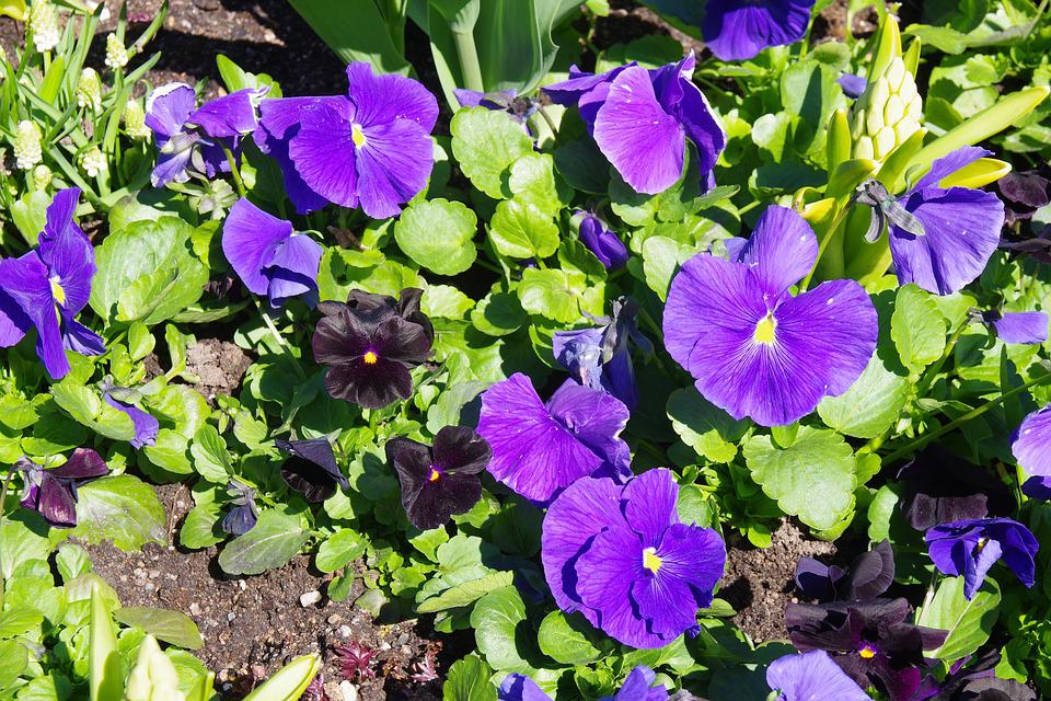 Flower, Plant, Garden, Nature, Leaf