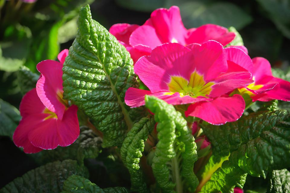 Nature, Flower, Plant, Garden, Leaf, Spring, Green