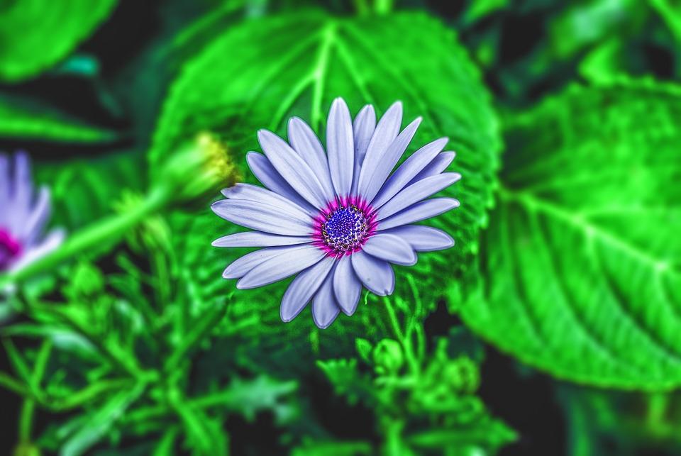 Flower Gerbel, Flower, Plant, Nature
