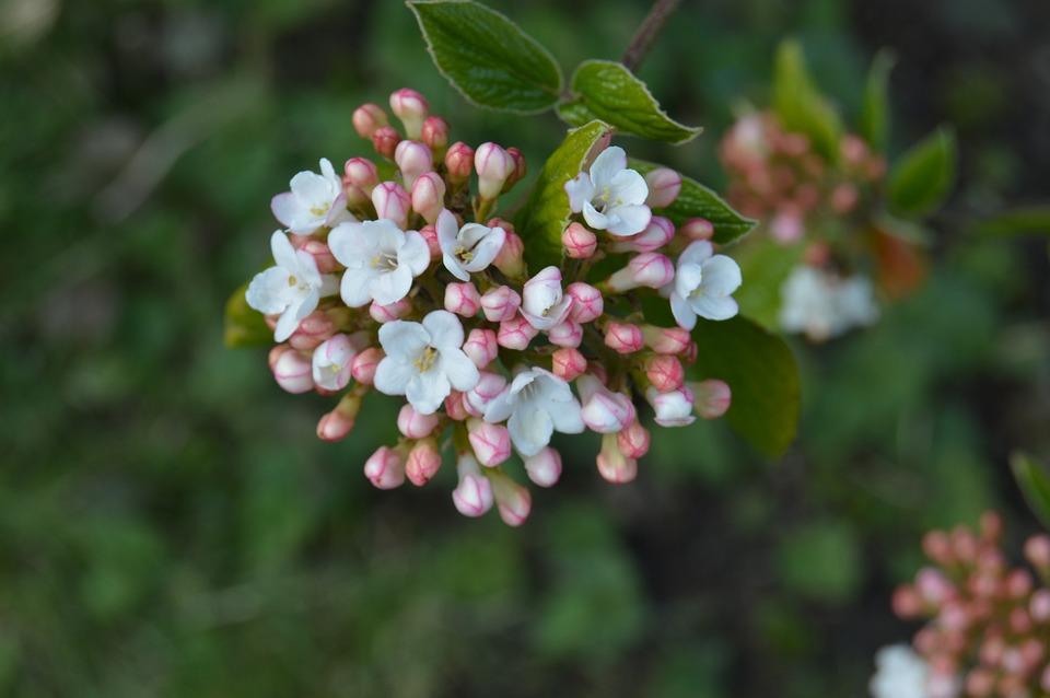 Flower, Nature, Plant, Tree, Leaf