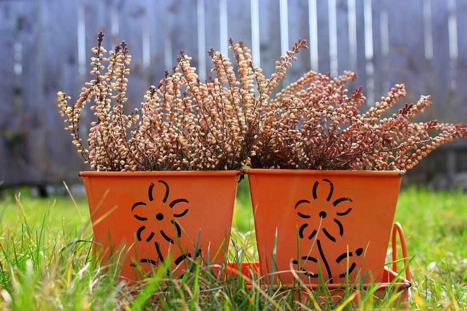 Heather, Flower Pot, Decoration, Plant, Nature