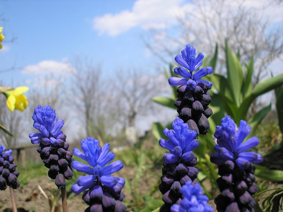 Nature, Plant, Flower, Season, Spring