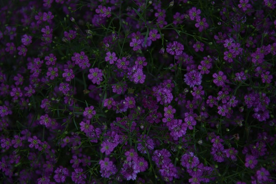 Flowers, Petals, Plant, Blossom, Bloom, Flora, Nature
