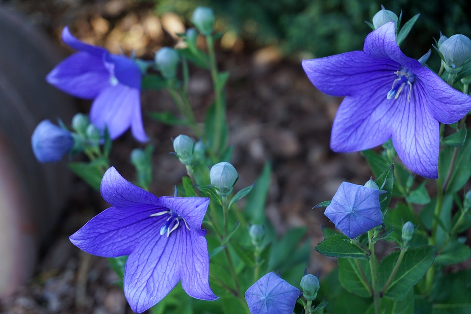Flowers, Purple, Nature, Plant, Flower