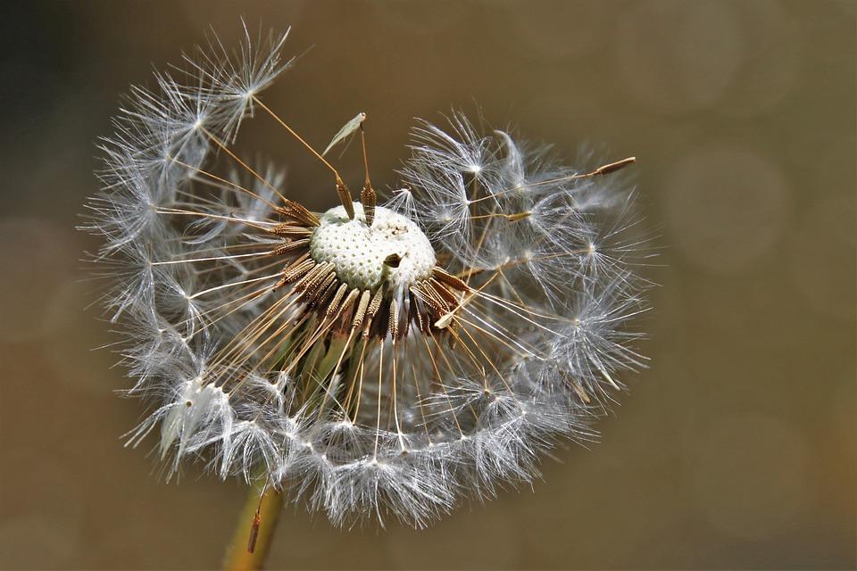 Nature, Closeup, No One, Plant, Fluffy, Near, Garden
