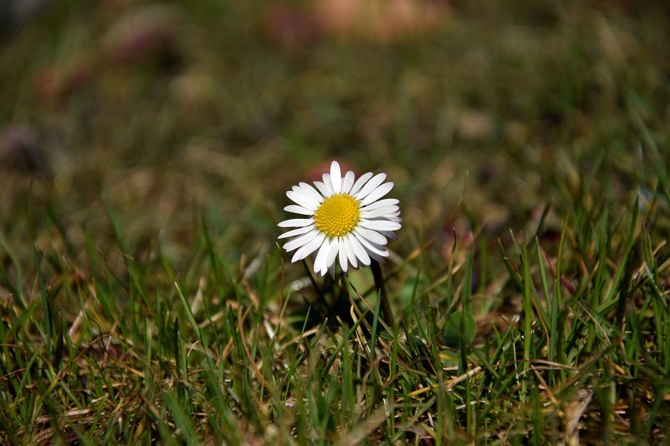 Nature, Grass, Plant, Summer