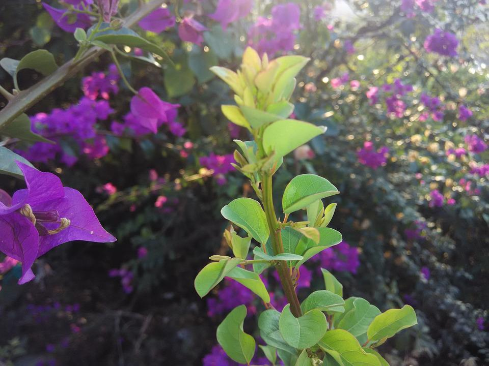Plant, Green, Nature