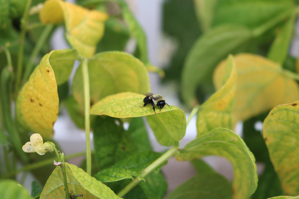 Bee, Leaf, Leaves, Nature, Plant, Insect