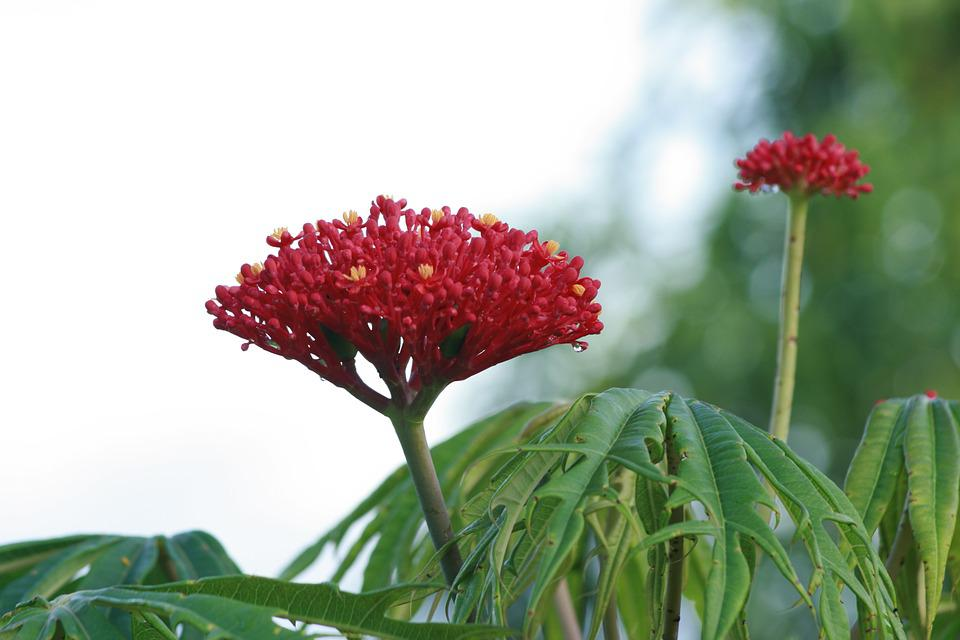 Nature, Plant, Leaf, Flower, Summer, Outdoors