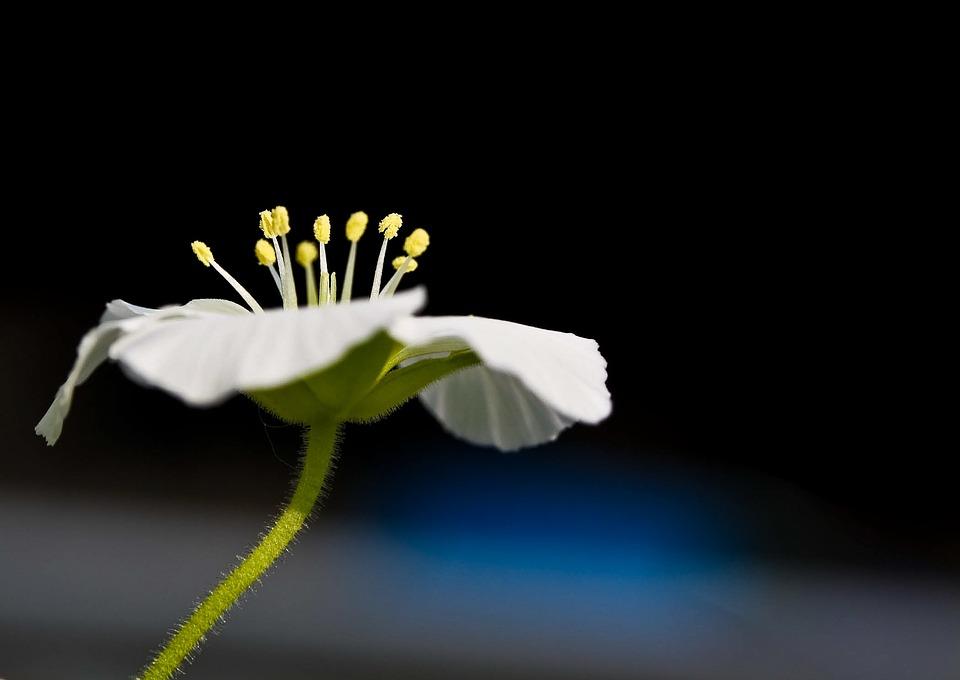 Blossom, Bloom, Flower, Plant, Macro, Nature