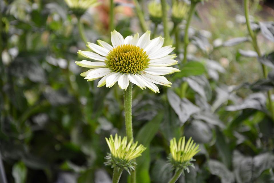 Free photo plant nature plants flower spring flower buds max pixel flower plant flower buds spring nature plants mightylinksfo