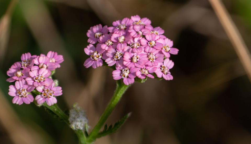 Flowers, Petals, Plant, Purple, Floral, Nature