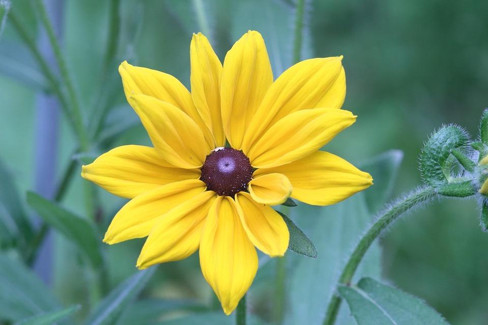 Nature, Plant, Flower, Summer, Sheet, Bright, Color