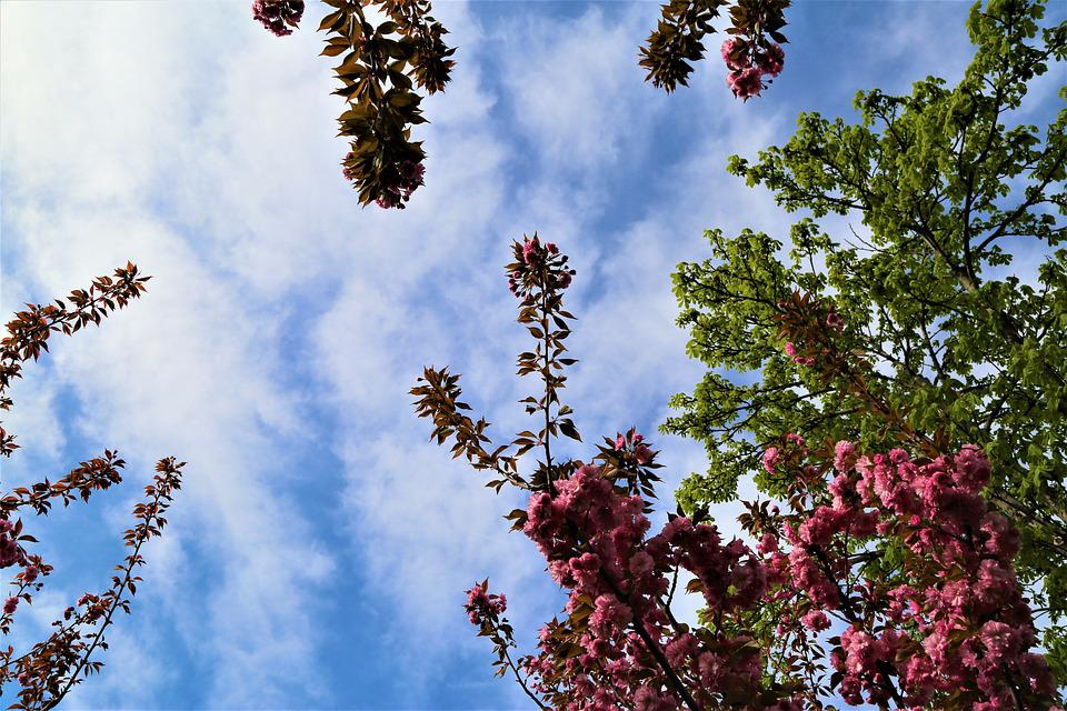 Tree, Nature, Current Season, Plant, Sky, Flower, Bud