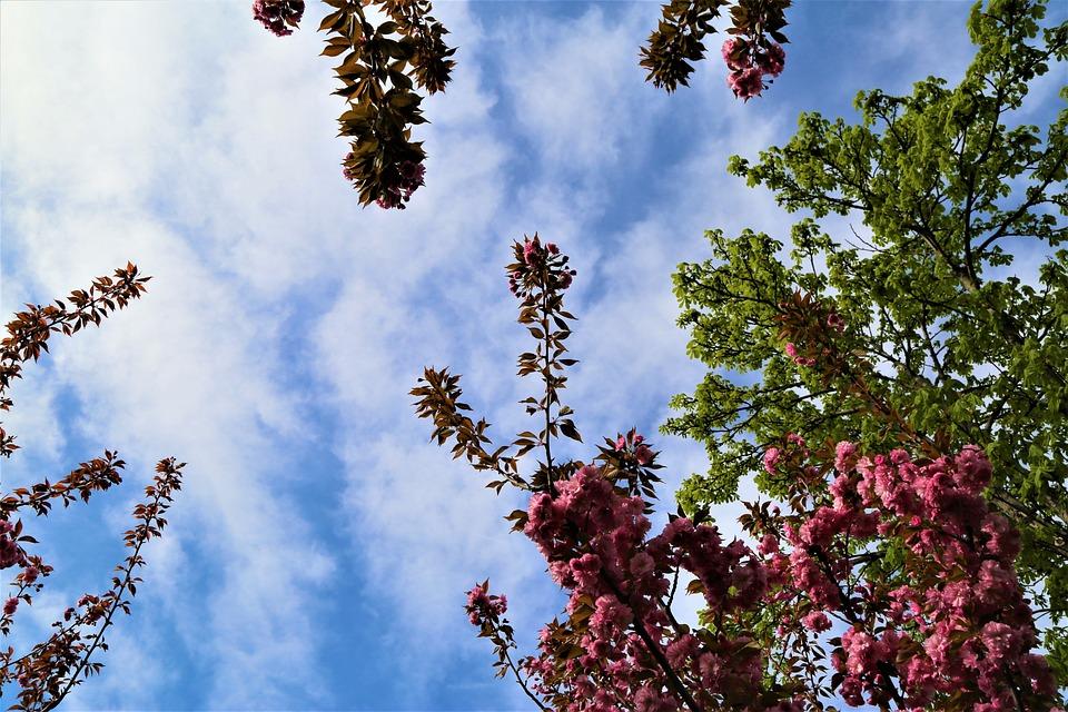 Tree, Nature, Current Season, Plant, Sky, Flower, Bud