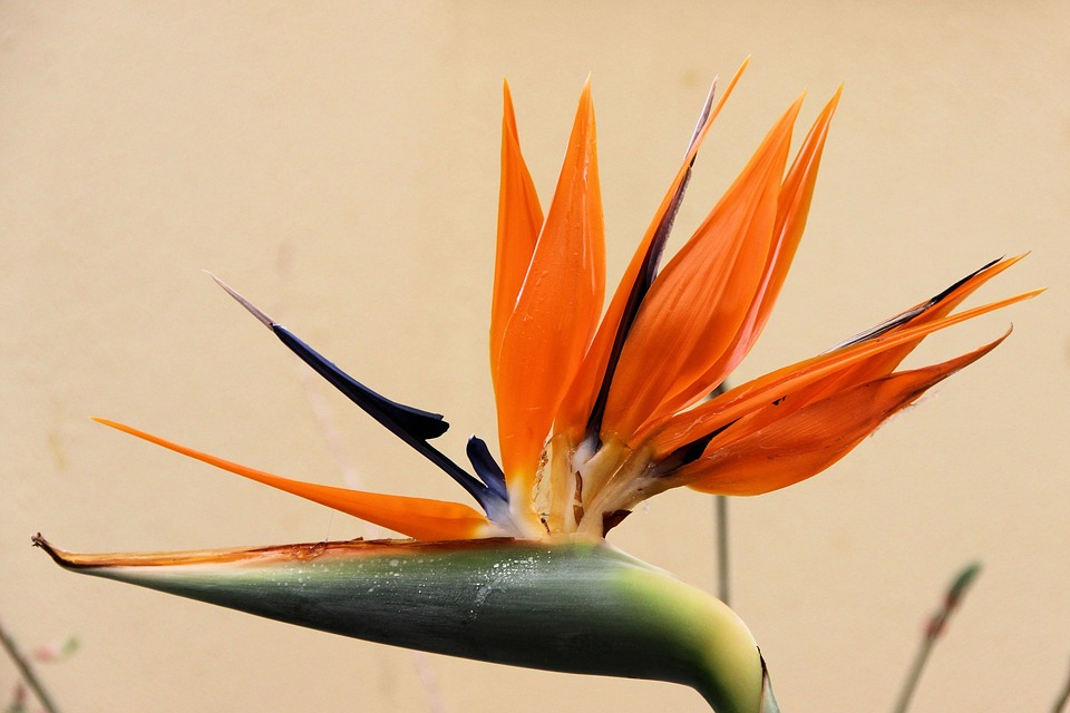 Nature, Plant, Spring, Flower, Close