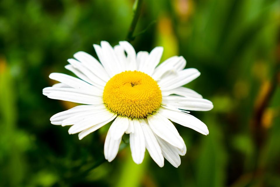 Plant, Nature, Flower, Summer