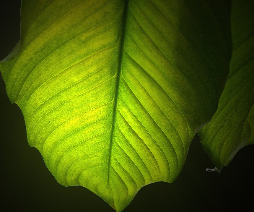 Leaf, Green Leaf, Nature, Plant, The Accuracy Of The