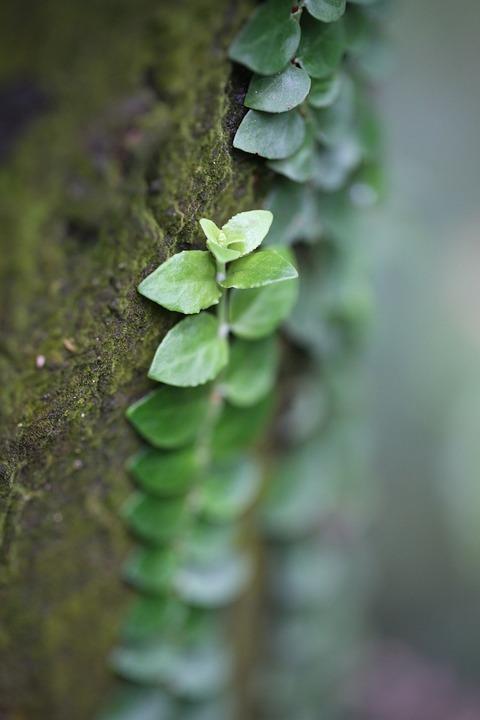 Greenery, Spring, Tree, Flag, Plant, Nature, Grow