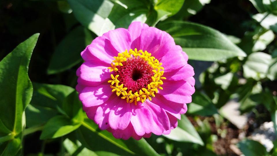 Flower, Nature, Garden, Plant, Nectar, Summer, Bloom