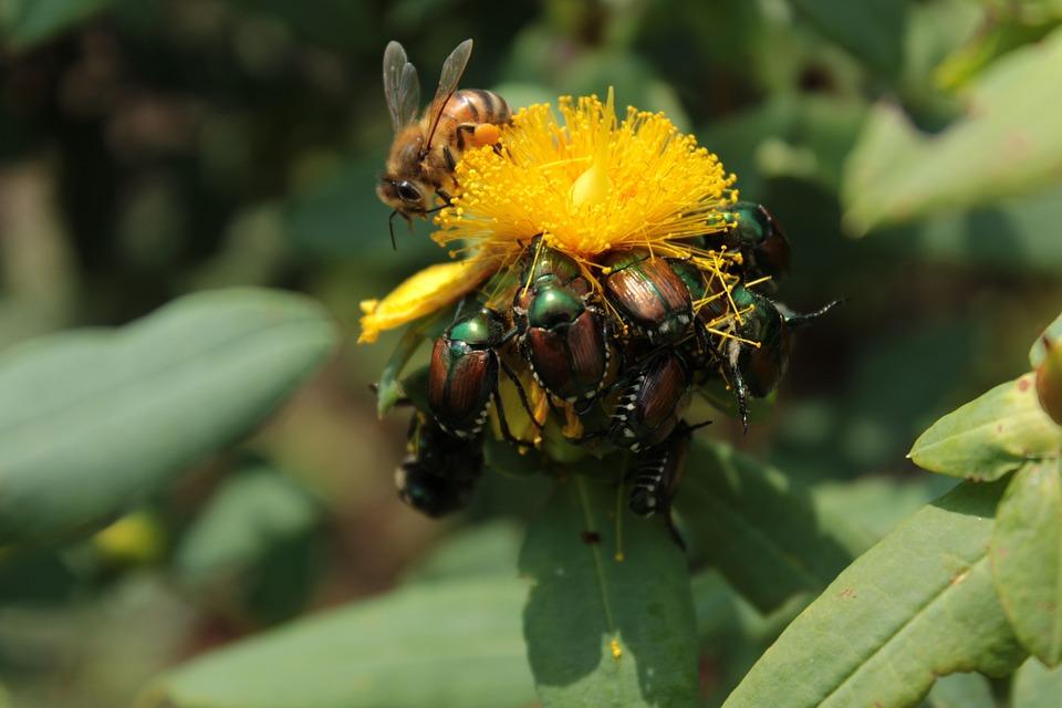 Plant, Yellow, Yellow Flower, Flower, Bee, Nectar