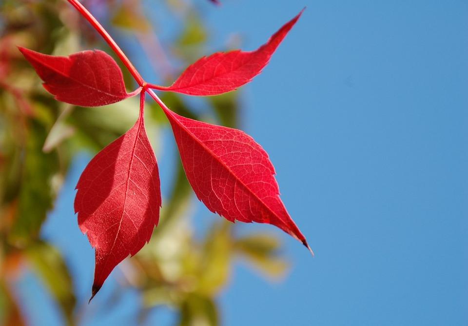 Sheet, Nature, No Person, Plant, Autumn, Perennial