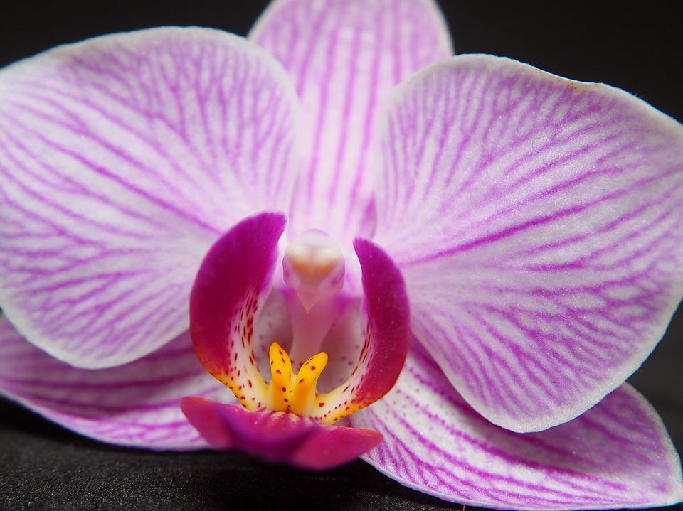Orchid, Blossom, Bloom, Flower, Plant, Nature