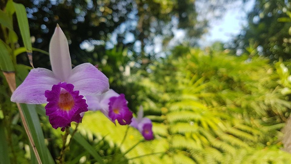 Orchids, Flower, Nature, Plant, Purple, Violet