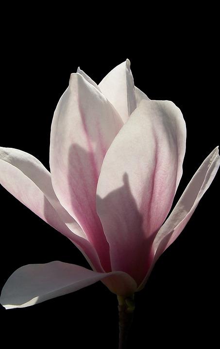 Free photo plant petal flower blooming no one nature max pixel flower nature plant no one petal blooming mightylinksfo