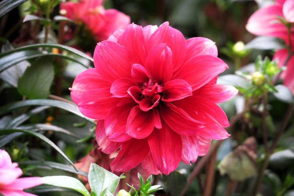Flower, Nature, Plant, Garden, Leaf, Petal, Close-up