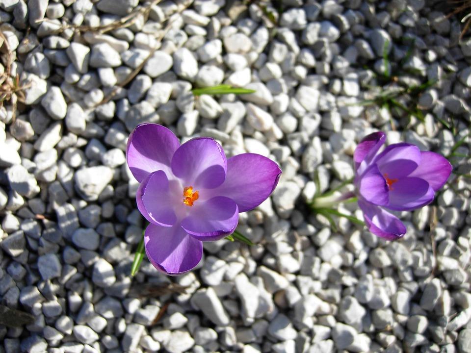 Nature, Flower, Plant, Garden, Summer, Petal, Flowers