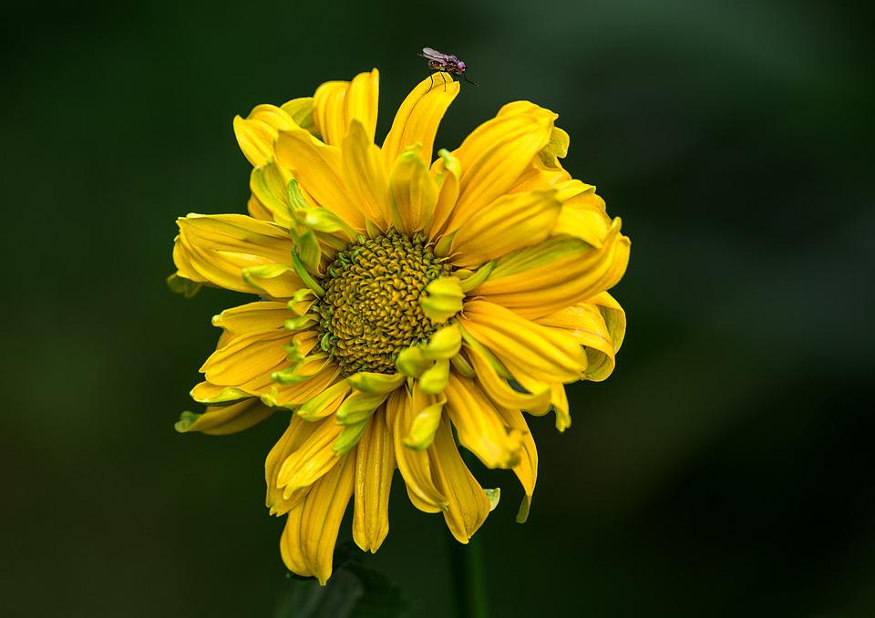 Flower, Nature, Plant, Summer, Petal, Insect